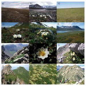 北極圏ー高山帯の植物は緯度が低いほど遺伝的多様性が減少している(平尾章 助教)