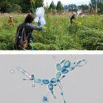 モデル生物多様性実習