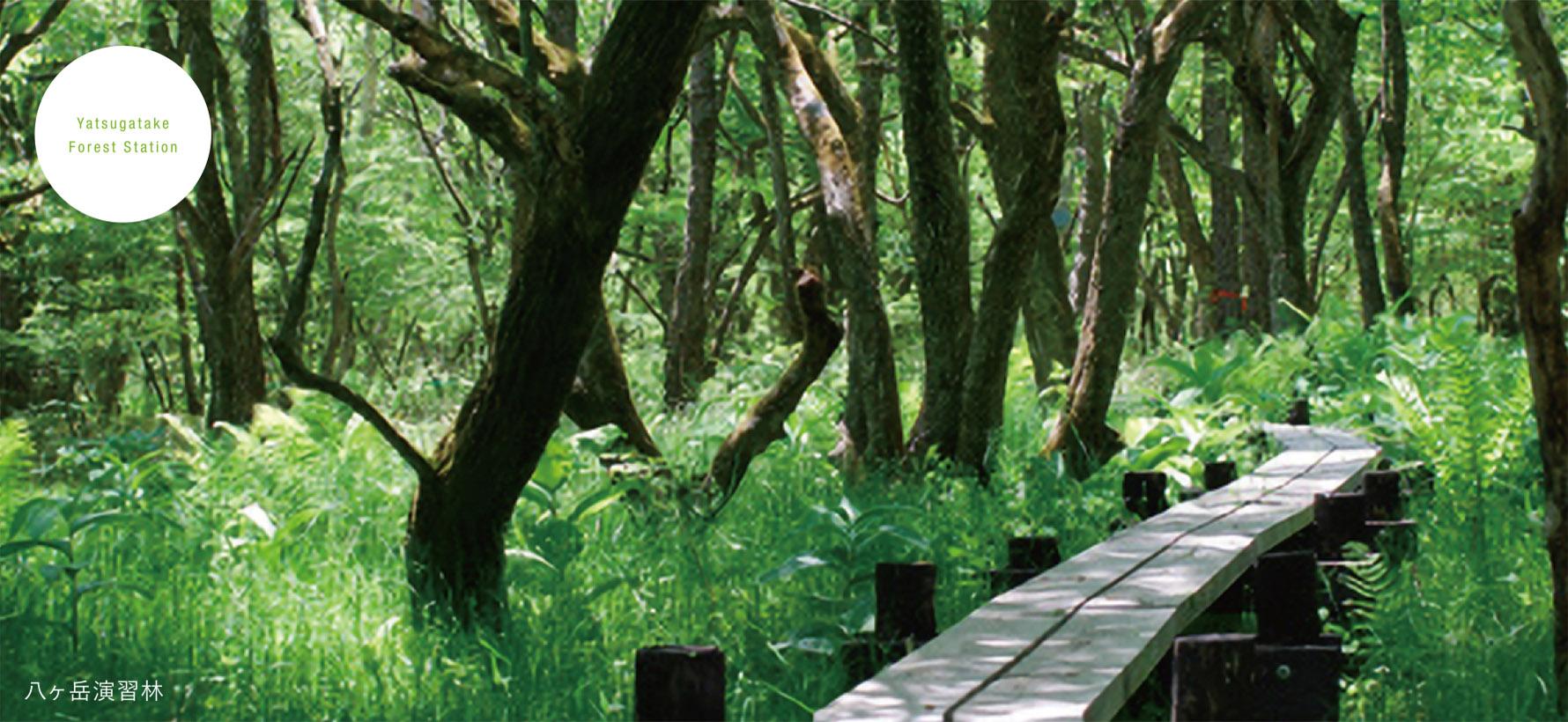 八ヶ岳演習林