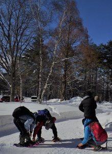 2月8日 シラカンバの種が雪原に舞っています