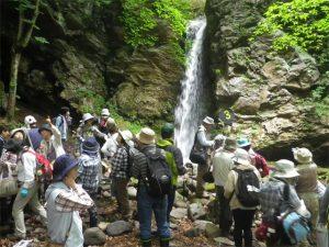 夏の自然観察会が開催される