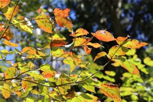 秋の自然観察会のお知らせ